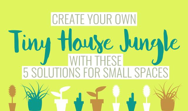 Tiny house plants guide