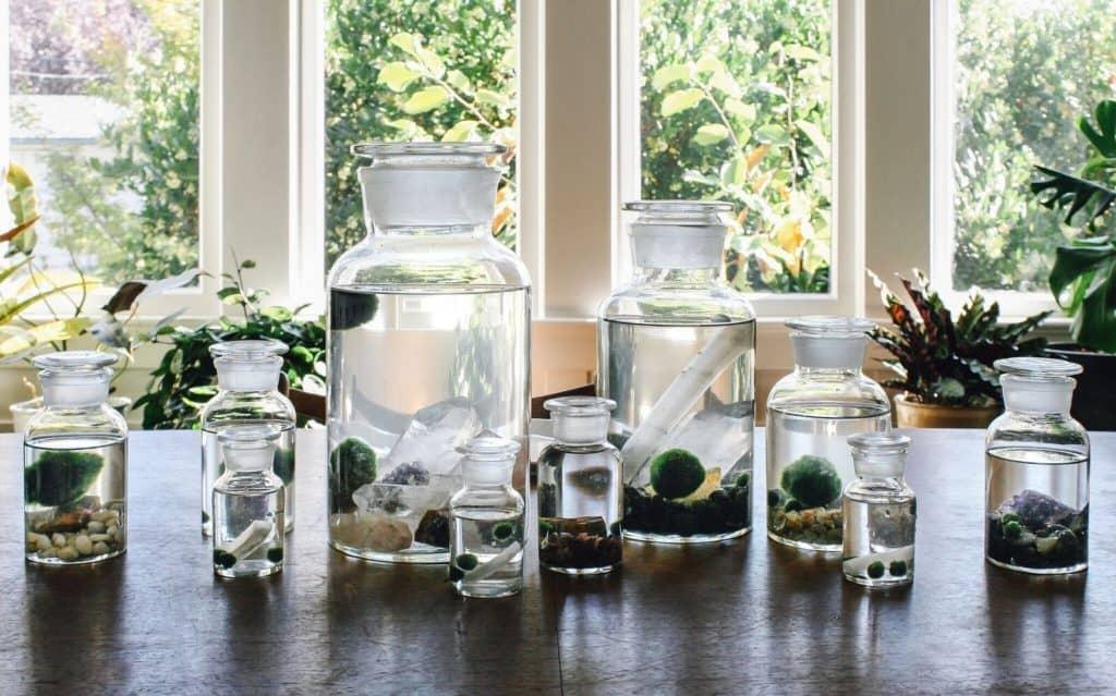 Tiny house plants - marimo moss balls
